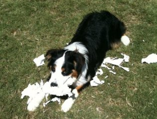8-10-11-toilet-paper-shred