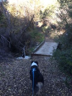 Bridge on Lynnmere Trail