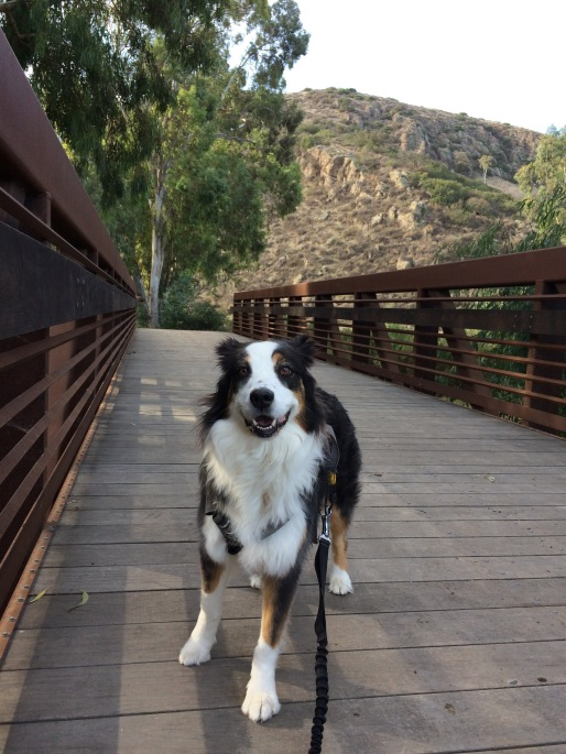 conejo-canyons-bridge-2