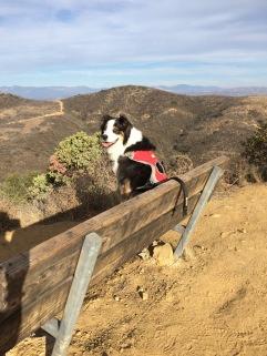 Bench puppy posing! 12-7-16