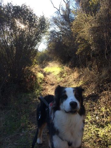 Ebb Tide Trail