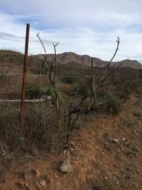 Springs Fire still apparent on Vista del Mar Trail