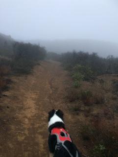 Foggy doggy hike