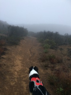 Foggy doggy hike