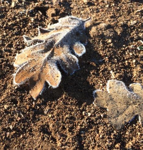 froz-leaf-1-12-20-16
